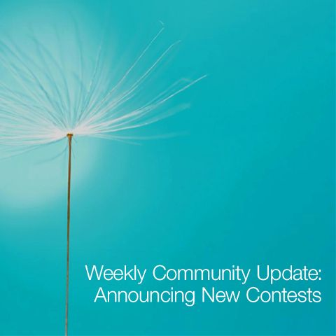 weekly contests update