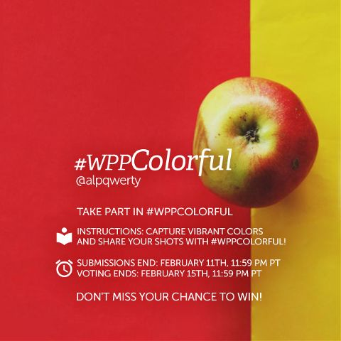 contest colorful photography colors