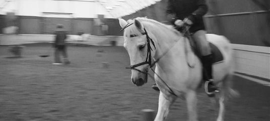 photography blackandwhite horse beautiful
