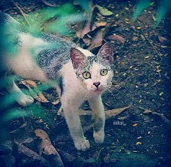 lomo lomoeffect cat greeneyes vignette