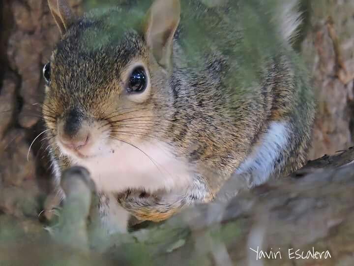 Sometimes when you look at nature it looks back.  #nature #cute #petsandanimals   #closeup  #wppanimals #wildlife
