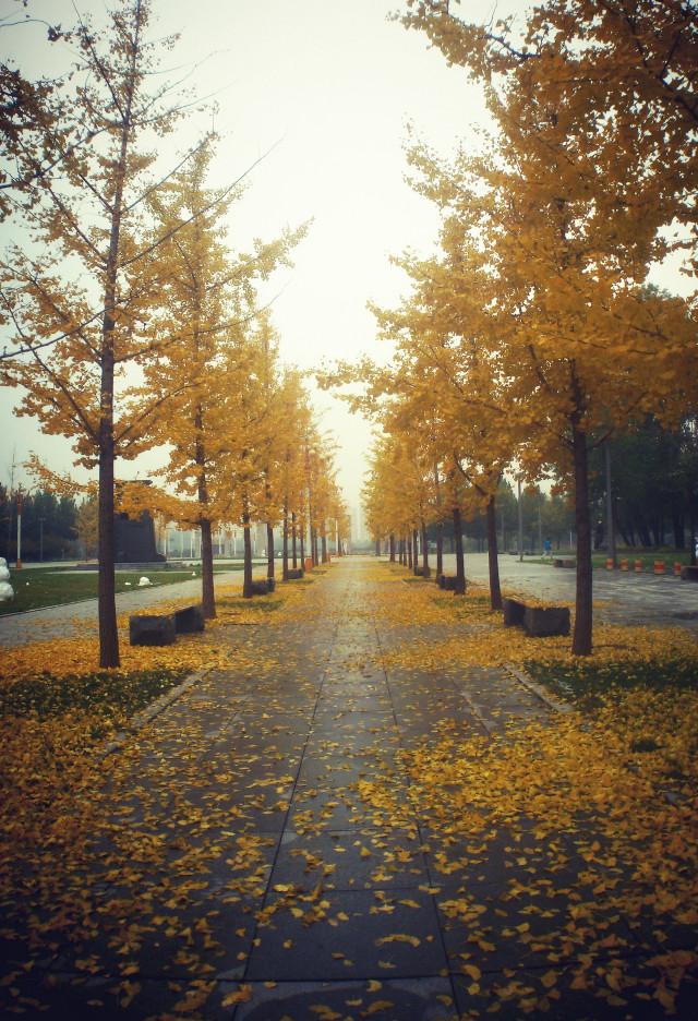 秋黄的校道