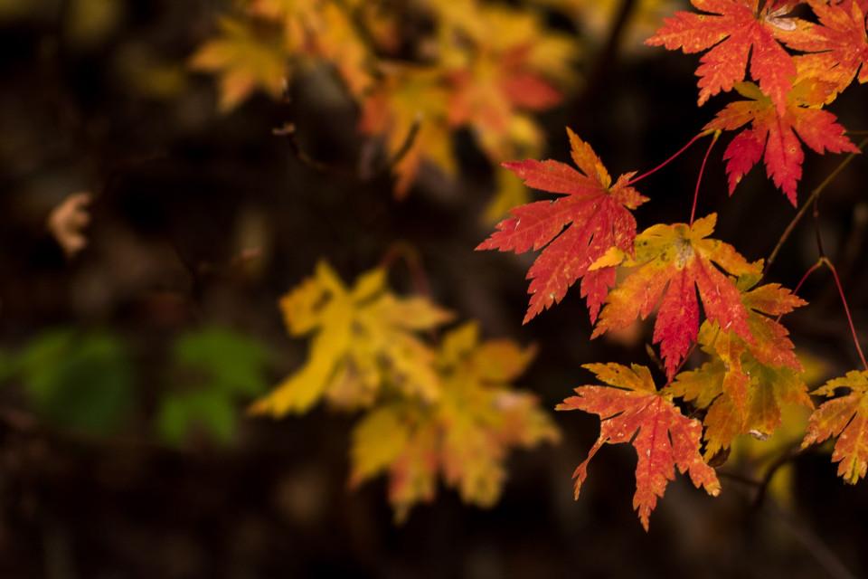 #fall#nature#leaf