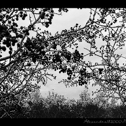 photography blackandwhite