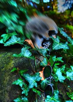 freetoedit colours skull
