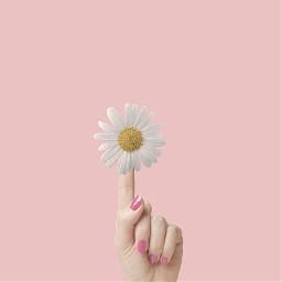 flower minimal madewithpicsart picsart hand