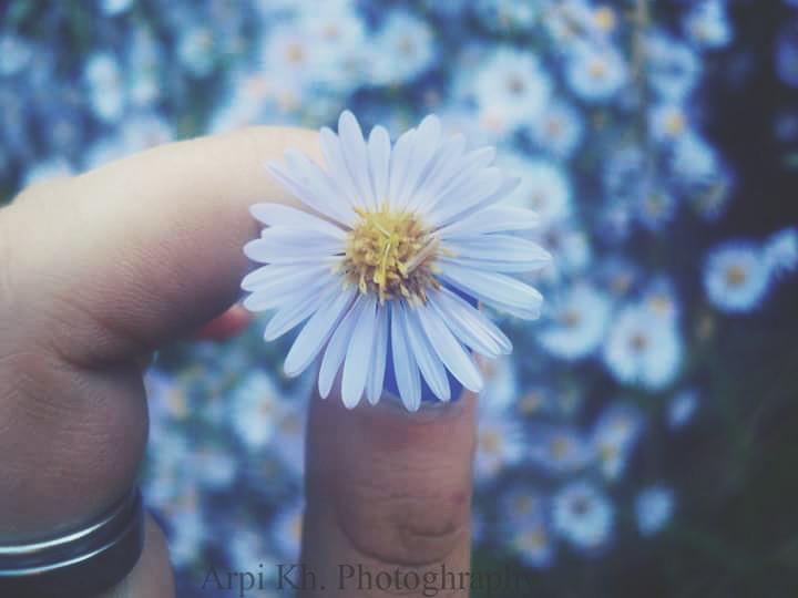 simple yet beutifull 💕📷🌼  #flower #photography #arpikhachaturyanc