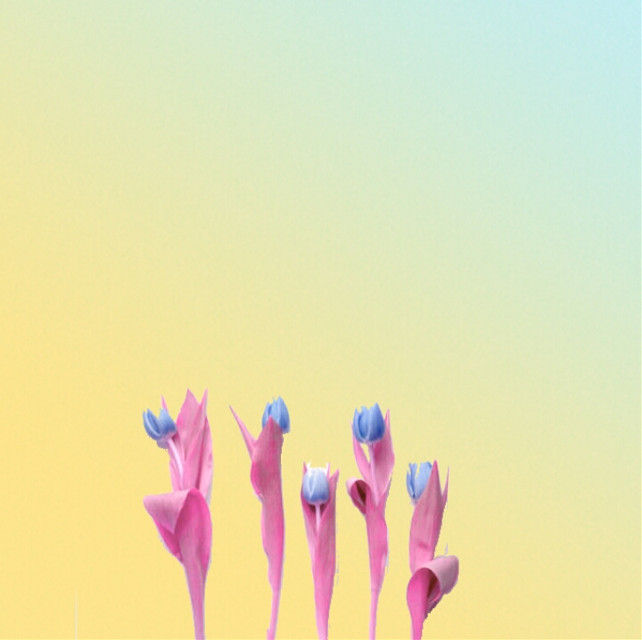 #minimal #candyminimal #retro #photography #popart #nature #flower #colorful #spring