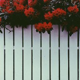 vintage vintageeffects vintageeffect vintagestreet vintagephotos