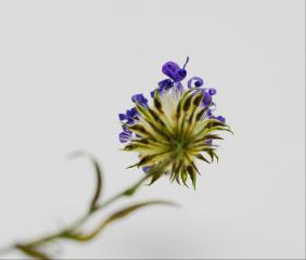 macro macroflower macro_flower flower flower_collection
