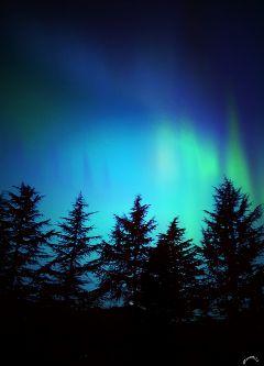 northernlights clipart trees sky art