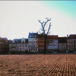 city sun sunlight buildings tree