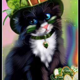 wdpleprechaun cat petsandanimals pet drawing wdpblackcat