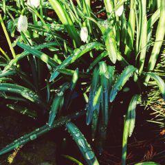 rain waterdrops raindrops spring