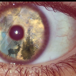 eye edit photography nature clear