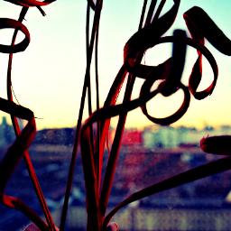 bright sunset photography bokeh macro