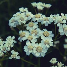 macro bokeh cute emotions flower
