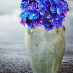 myart madewithpicsart hydrangeas flowers oilpainting